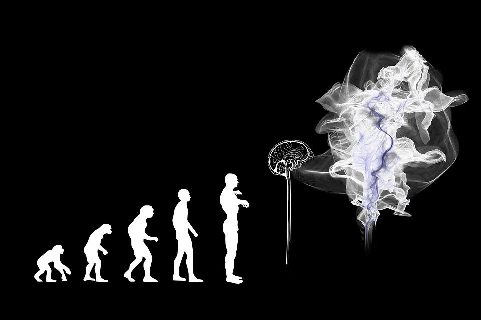 evolution-3885331_960_720